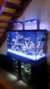 Aquarium Leasing