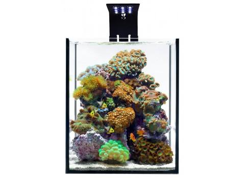 Ecoxotic Ecopico Reef Tank