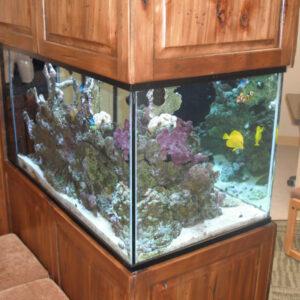 Aquariums and Aquarium Furniture