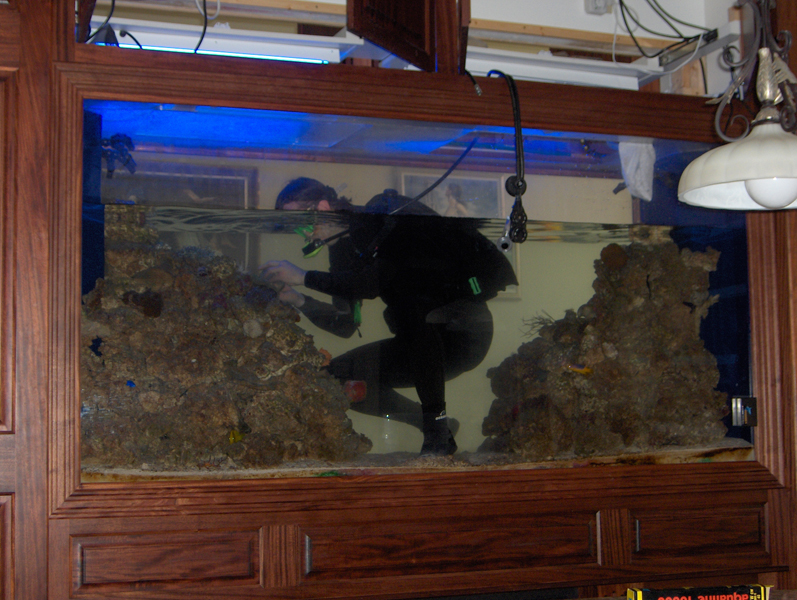 Aquarium Maintenance: We make owning an aquarium easy with hassle free ...