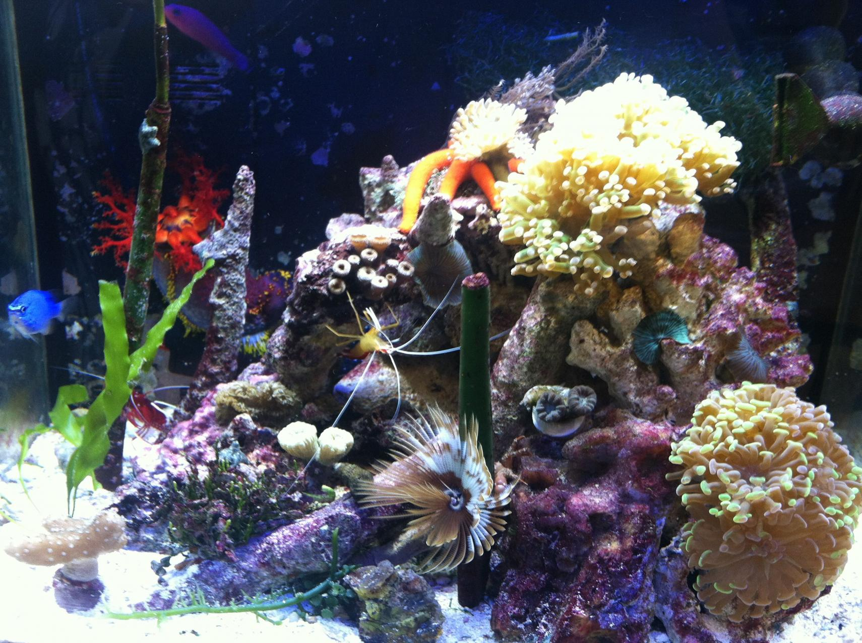Nano saltwater aquarium guide for Saltwater reef fish