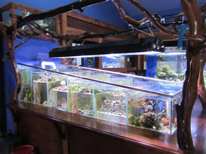 Why Own An Aquarium?