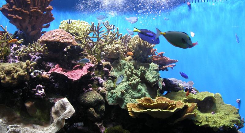 Reef Safe Fish For Saltwater Aquarium