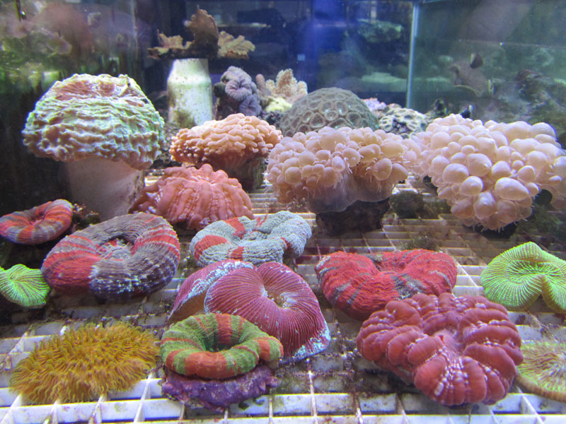 Saltwater aquarium pictures for Saltwater fish tank kit