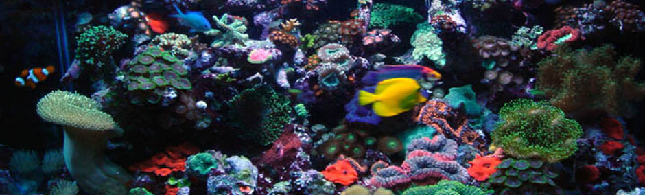 Saltwater fish tank care saltwater fish 2017 fish tank for Best water for fish tank