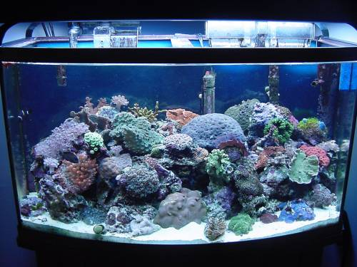 Saltwater aquarium lighting for Marine fish tanks